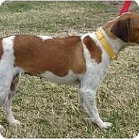 Adopt A Pet :: PENDINGMilo - Toronto/Etobicoke/GTA, ON