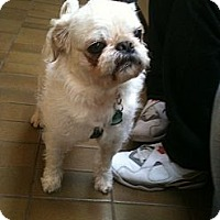 Adopt A Pet :: Tyrone - Adoption Pending - Vancouver, BC
