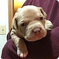 Adopt A Pet :: Precious' boys - Seattle, WA