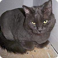 Adopt A Pet :: Chloe - bloomfield, NJ