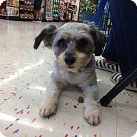 Adopt A Pet :: Benji AKA BJ - Corona, CA
