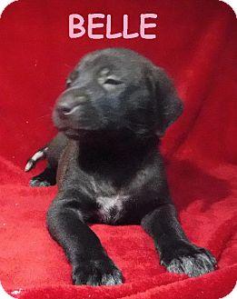 Shepherd (Unknown Type) Dog for adoption in Batesville, Arkansas - Belle