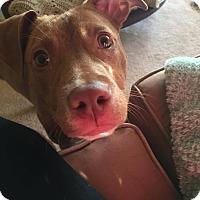 Adopt A Pet :: Reba - Garden City, MI