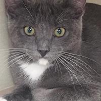 Adopt A Pet :: Scout - Walnut Creek, CA