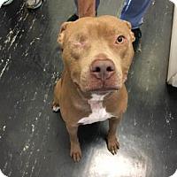 Adopt A Pet :: Carl - Gainesville, FL