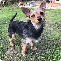 Adopt A Pet :: Winn-Dixie - Austin, TX