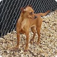 Adopt A Pet :: Pax - Queenstown, MD