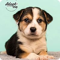 Adopt A Pet :: Lokilani - Cincinnati, OH
