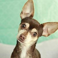 Adopt A Pet :: Muneca - Romeoville, IL