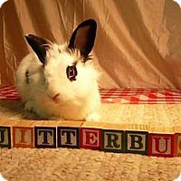 Adopt A Pet :: Jitterbug - Newport, DE