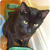 Adopt A Pet :: Abby - Lake Charles, LA
