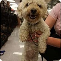 Adopt A Pet :: Murphy - Arlington, TX