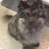 Adopt A Pet :: Raja - Phoenix, AZ
