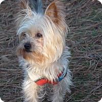 Adopt A Pet :: Jade - Suwanee, GA