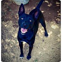 Adopt A Pet :: Duke - Fort Valley, GA