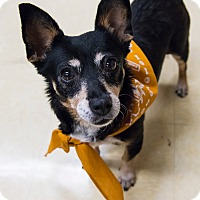 Adopt A Pet :: Minnie - Grass Valley, CA