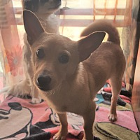 Adopt A Pet :: Jimmy - Mansfield, TX