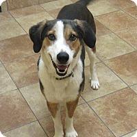 Adopt A Pet :: Lenni *Petsmart GB* - Appleton, WI