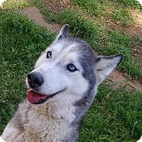 Adopt A Pet :: Lanier - Greensboro, GA