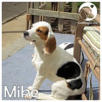 Adopt A Pet :: Mike - Pittsburgh, PA