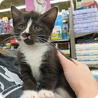 Adopt A Pet :: .Alena - Ellicott City, MD