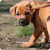 Adopt A Pet :: Fern - Rochester, NY