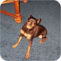 Adopt A Pet :: DAISY - Springvale, ME
