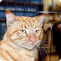 Adopt A Pet :: Colby - New Port Richey, FL