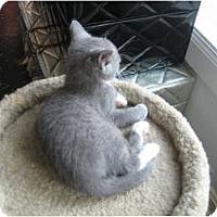 Adopt A Pet :: Tweety - Jeffersonville, IN