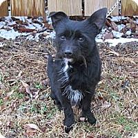 Adopt A Pet :: Teaspoon - Braintree, MA
