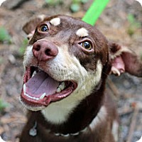 Adopt A Pet :: Alijah - Tinton Falls, NJ