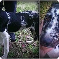 Adopt A Pet :: Sergeant - Kingwood, TX