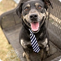 Adopt A Pet :: Thor - ADOPTED! - Zanesville, OH