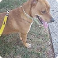 Adopt A Pet :: Kee - Bloomfield, NJ