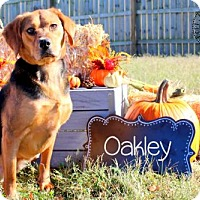 Hound (Unknown Type) Mix Dog for adoption in Bardstown, Kentucky - Oakley