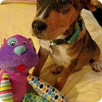 Adopt A Pet :: Bubba - Knoxville, TN
