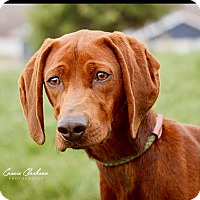 Adopt A Pet :: Stella - ADOPTED! - Zanesville, OH