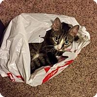 Adopt A Pet :: Karen C1609 - Shakopee, MN