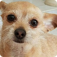 Adopt A Pet :: Hermana - Las Vegas, NV