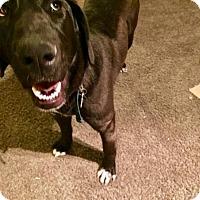 Adopt A Pet :: Burma - Salt Lake City, UT