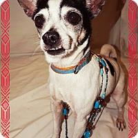 Adopt A Pet :: Roxy - Converse, TX