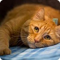 Adopt A Pet :: Charles - Portland, OR