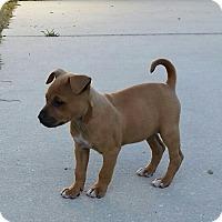 Adopt A Pet :: Lindsay - Weeki Wachee, FL