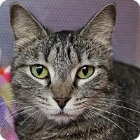 Adopt A Pet :: Makaria - Sarasota, FL