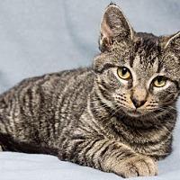 Adopt A Pet :: Stefan - Alpharetta, GA