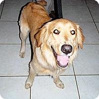 Adopt A Pet :: Chevy - Murdock, FL