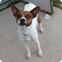 Adopt A Pet :: PJ in Houston - Houston, TX