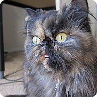 Adopt A Pet :: Tory - Beverly Hills, CA