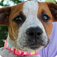 Adopt A Pet :: Penelope - Mount Juliet, TN