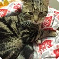 Adopt A Pet :: Zephyr - Quilcene, WA